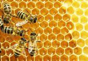 تولید سالانه ۱۲ هزار تن عسل در شهرستان خوی